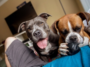Close-Up Portrait Of Dogs At Home